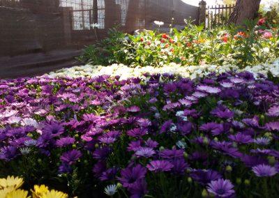 garden-flor de temporada-burriana